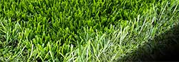 picture of synlawn turf
